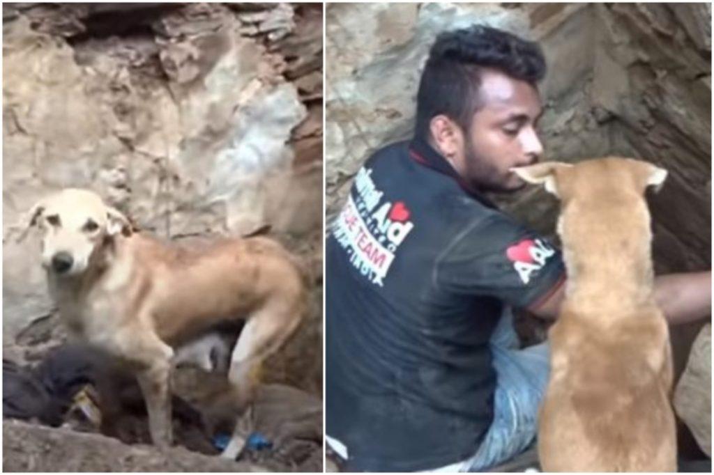 Chó con bị vùi lấp dưới đất đá, chó mẹ vội chạy khắp nơi 'khóc' cầu xin giúp đỡ