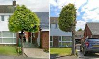'Xẻ đôi cái cây': Mọc lấn nhà hàng xóm, cây to 'bị cưa đôi' bất ngờ thành 'kỳ quan cây cảnh'