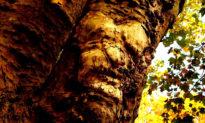 Pareidolia - Hiện tượng ảo giác nhìn đâu cũng thấy khuôn mặt người