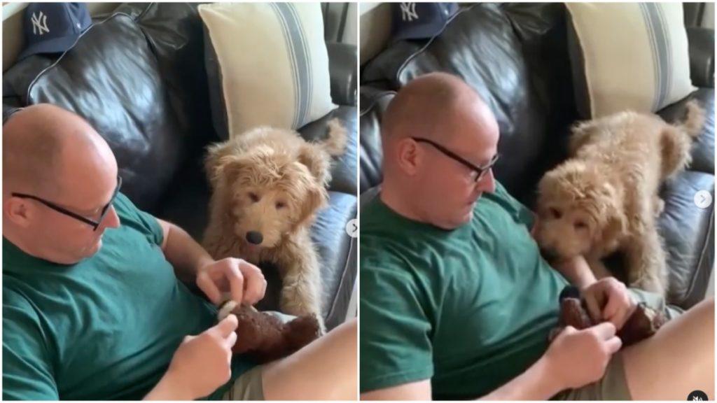 Lỡ 'làm bị thương' thú bông, chú chó 'ân hận' và lo lắng nhìn ông chủ 'phẫu thuật' cho nó