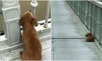 Chú chó ngồi trên cầu suốt 4 ngày, đợi chờ người chủ 'không bao giờ trở lại'