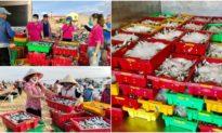 'Gom cá tặng người TP.HCM': Xúc động món quà từ miền Trung để 'báo đáp ân tình' vùng tâm dịch