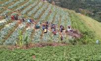 Video: Xe bán tải gặp nạn lật dưới chân đồi, hơn 50 người dân làng 'hợp lực' dùng dây thừng kéo lên