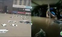 Nhân viên tàu điện ngầm Trịnh Châu: Thảm kịch trên tàu là nhân họa