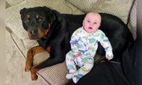 'Ngủ ngoan nhé, tớ trông chừng cho': Tình bạn đáng yêu giữa em bé sơ sinh và chú chó 'khổng lồ'