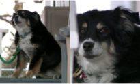 Chú chó 'triệu phú': Chủ qua đời để lại khoản thừa kế 5 triệu đô cho 'chó cưng'