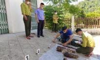 6 linh trưởng nghi là voọc chà vá chân nâu bị giết hại trong Vườn Quốc gia Bạch Mã