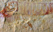 Phát hiện bộ não cổ đại: Sự bảo tồn phi thường của hệ thần kinh 310 triệu năm tuổi