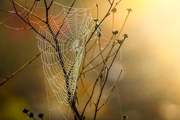 Tinh hoa Đông y: Dùng mạng nhện bám bụi và giấm để trị bệnh [Radio]
