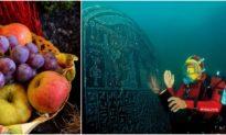 Giỏ trái cây 2.000 năm trước vẫn nguyên vẹn dưới thành phố chìm Ai cập cổ đại