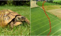 Thế nào là tốc độ rùa bò: 'Trốn nhà đi chơi' cả 1 năm, rùa cưng đi 'xa' tới… 1 km