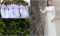 Tại sao đàn ông Âu Mỹ 'yêu thích' vẻ đẹp thuần Á Đông của phụ nữ Việt?