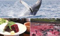 Vì sao Nhật Bản không săn bắt cá voi nhiều nhất, nhưng lại bị phản đối nhiều nhất?