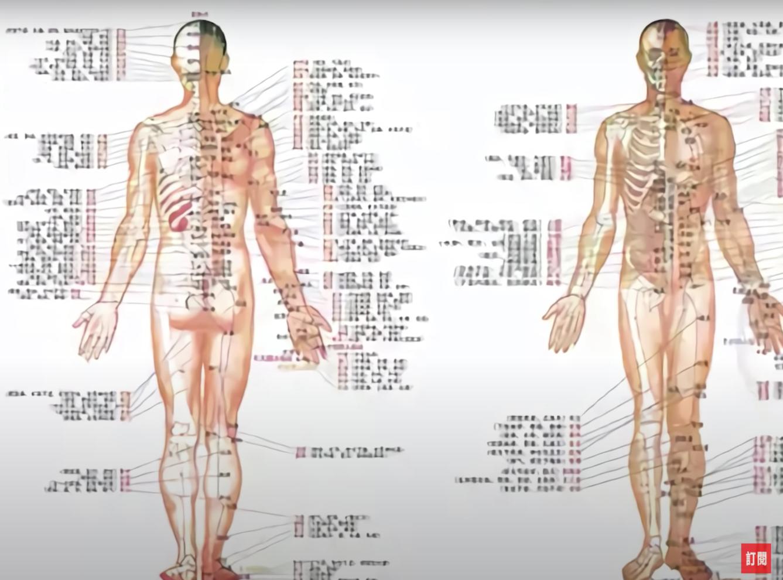 Đông y cho rằng cơ thể con người chứa đầy các mạch lạc và các cơ quan để tạo thành một hệ thống kinh mạch trên toàn cơ thể (Ảnh chụp màn hình video)