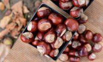 5 món ngon từ hạt dẻ giúp bổ thận trong mùa thu