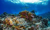 Các nhà nghiên cứu hoàn thành bản đồ chi tiết đầu tiên về san hô toàn cầu