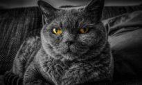 Xuất hiện ca lây bệnh dịch phổi từ mèo sang người tại bang Wyoming, Hoa Kỳ