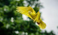 Lông vũ - Kho báu của các loài chim