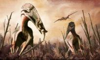 Khai quật 'thằn lằn có cánh' thời tiền sử ở Chile