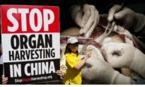 Bác sĩ Mỹ: Lo ngại bị trả thù, cộng đồng y tế im lặng trước hoạt động mổ cướp nội tạng của ĐCS Trung Quốc