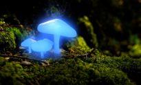 Tìm ra công nghệ giúp cây phát sáng thay thế đèn đường