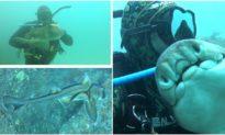 'Tình bạn diệu kỳ': Thợ lặn Úc và con cá mập làm bạn của nhau suốt 11 năm