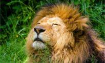 Top 10 loài động vật săn mồi hung dữ nhất hành tinh