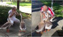 Cụ ông chơi kèn harmonica trong công viên và hai con ngỗng đáp lại một cách kỳ diệu