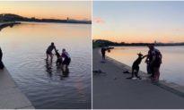 Chuột túi 'bắt tay' cảm ơn người đàn ông đã cứu sống nó dưới hồ nước lạnh giá