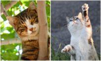 Ứng dụng mới trên điện thoại cho biết liệu mèo của bạn có hạnh phúc hay không
