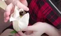 Vô tình cứu một chú ong nghệ, cô bé 13 tuổi và chú ong trở thành bạn thân