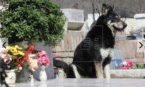 Chú chó trung thành ở Argentina: 12 năm canh giữ mộ chủ