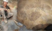 Phát hiện hóa thạch khổng lồ của loài săn mồi mới tuyệt chủng cách đây khoảng 500 triệu năm