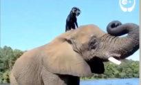 Tình bạn thân thiết của voi và chó bị bỏ rơi