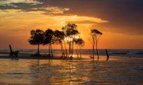 """Rừng cây """"nhảy múa"""" kỳ lạ dưới hoàng hôn ở Indonesia có thực sự chuyển động ?"""