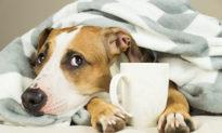 """Cún cưng nhà bạn có bị """"rối loạn cảm xúc theo mùa"""" không?"""