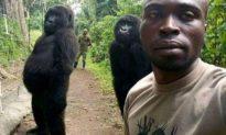 Khỉ đột nổi tiếng vì biết 'tạo dáng' chụp hình đã qua đời trong vòng tay yêu thương của người chăm sóc
