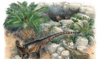 Phát hiện loài khủng long ăn thịt tí hon ở xứ Wales