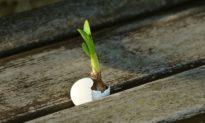 Khi tuyệt vọng trong cuộc sống, hãy nhớ 3 điểm này!