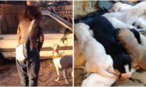 Chó mẹ gãy chân đi tìm người giúp đàn con mới sinh của nó