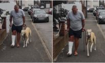 Chủ bị ngã gãy chân, chó cưng bắt chước đi cà nhắc để thể hiện sự 'đồng cảm'