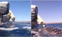Video: Chó cưng 'hôn' cá mập voi trong lần chạm mặt đầu tiên