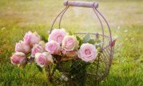 Thưởng thức hoa hồng: Vị ngon, Sắc đẹp và Sự sáng suốt