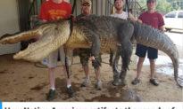 Phát hiện cổ vật 6.000 năm tuổi trong bụng cá sấu Mississippi