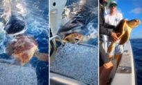 Video: Thuyền viên giải cứu rùa biển bị cá mập hổ truy sát