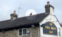 Chú chó dachshund 'Spiderman' trên tầng thượng quán rượu ở Anh